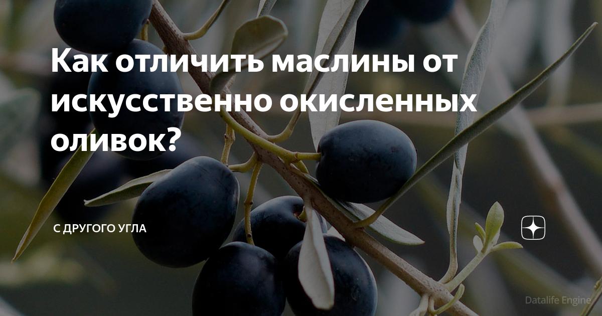 Как отличить маслины от искусственно окисленных оливок?