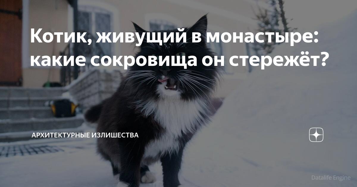 Котик, живущий в монастыре: какие сокровища он стережёт?